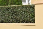 VIC Burwood Privacy fencing 28